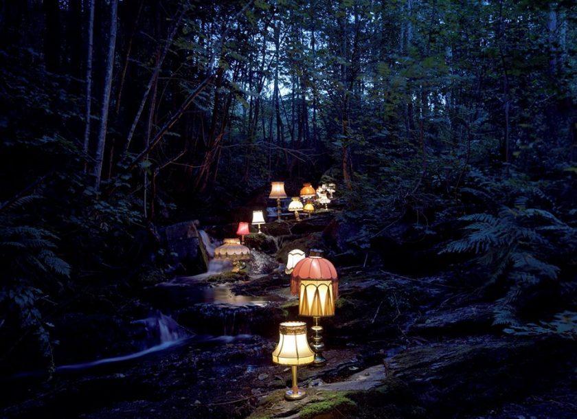 lamplightforest